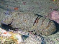Cuidado con lo que hay camuflado en el mar