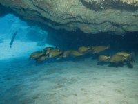 Bajo las rocas en la profundidad del mar