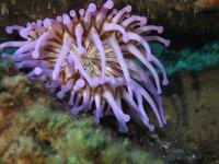 Desucubriendo joyas marinas