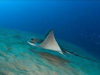 Asombrosa fauna submarina