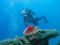 在海星之间潜水