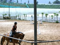 Clases de equitación en Tenerife