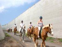Rutas a caballo en Tenerife