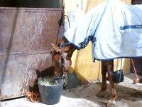 Uno de nuestros caballos en sus instalaciones