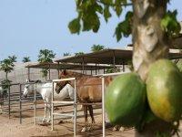 Excursiones a caballo en Tenerife