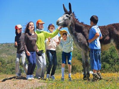Campamento en granja escuela en Albuñuelas