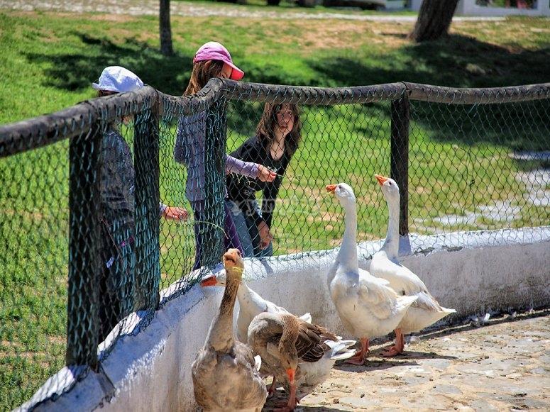 Niños en granja escuela