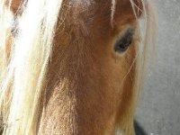 Conoce el mundo de los caballos