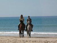 Los caballos en la playa