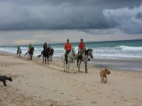 Paseo en caballo y perros en la playa