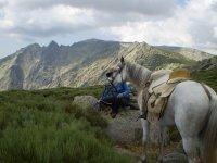 Paisaje y caballo