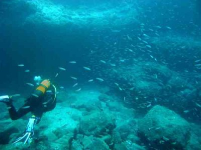 PADI潜水员在波多黎各