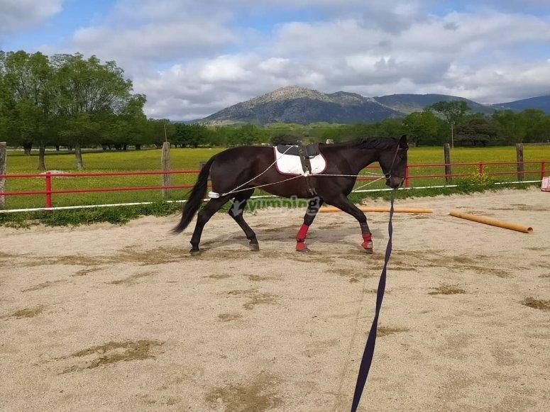 Entrenando con el caballo
