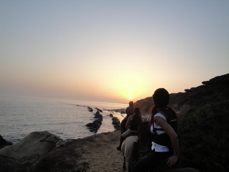 博洛尼亚海滩上的日落在马背上