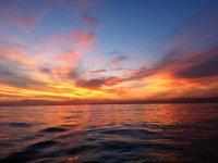 日落乘坐海豚导引头