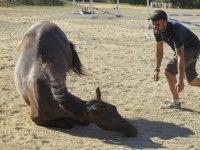 entrenamiento de caballos doma