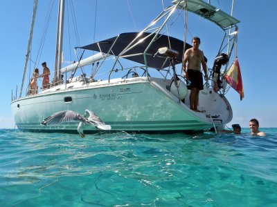 Paseo en velero VIP Bahía de Palma 3 horas