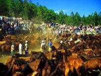 Rapa das bestas en Baiona