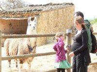 Visiting the llamas
