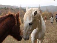 Algunos de nuestros espectaculares caballos
