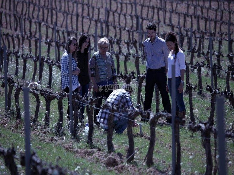 Explicacion sobre los vinos