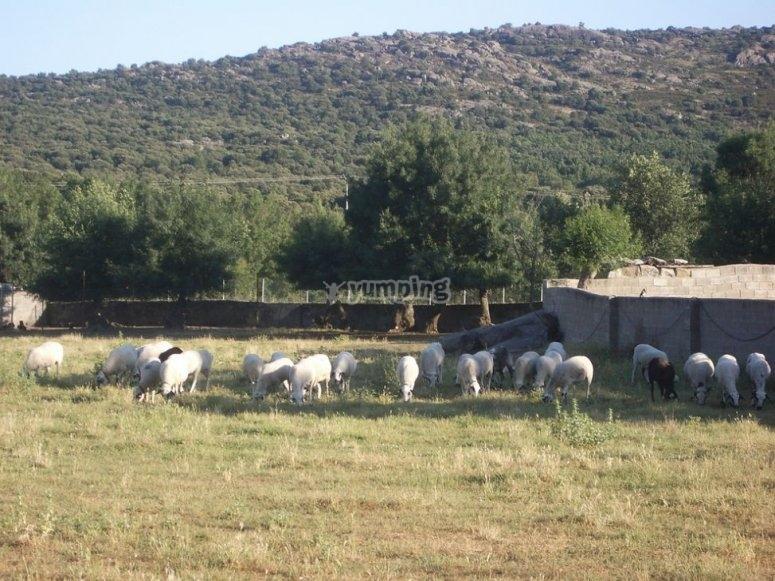 Bestiame vicino alla cosa
