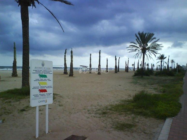 沙滩和棕榈树在沙滩上