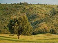 马匹享受托莱多山脉的美景