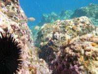 Snorkeling views