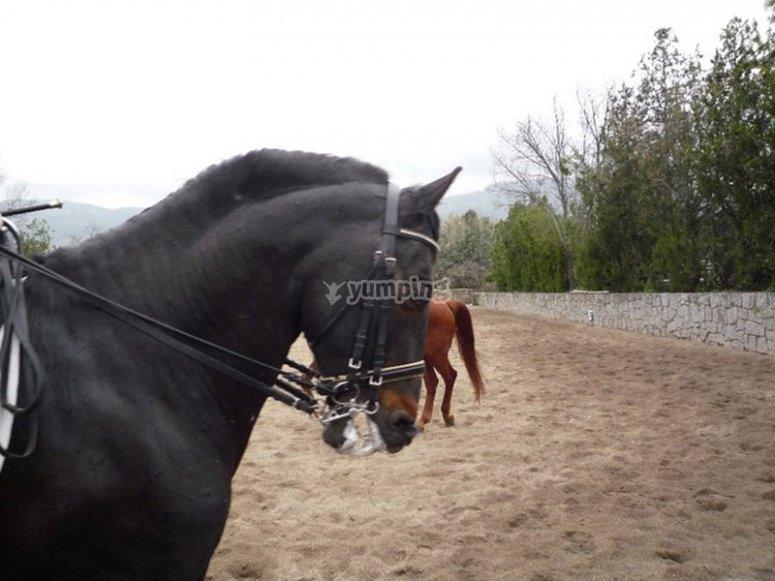 我们的马匹