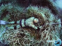 Camouflaged at the bottom of the sea