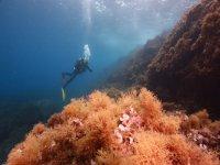 immersioni nell'isola di murada