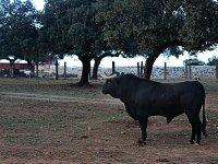 Uno de los toros