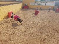 Trying luck in bullfighting