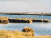 Zona acuatica de Doñana