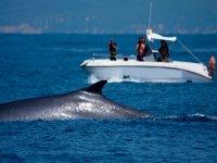 Avvistamento di cetacei Tarifa Gibilterra