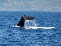 avvistamento di cetacei, balena