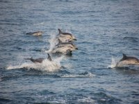 gruppi di delfini