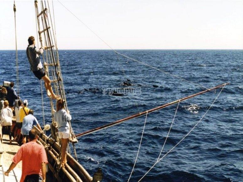 viendo cetaceos