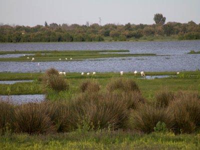 Equitazione a Doñana, 3 ore