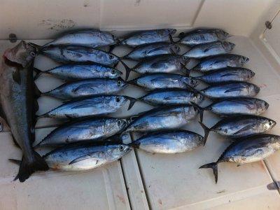 Pesca de Altura Cantabria Pesca