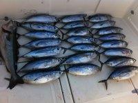 Pesca de bonitos