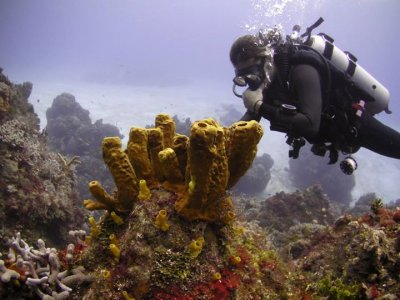 Inmersión de buceo, equipo completo, Cabo de Palos