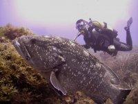 Inmersión de buceo con equipo completo Isla Grosa