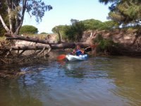 Pasando con el kayak junto al tronco