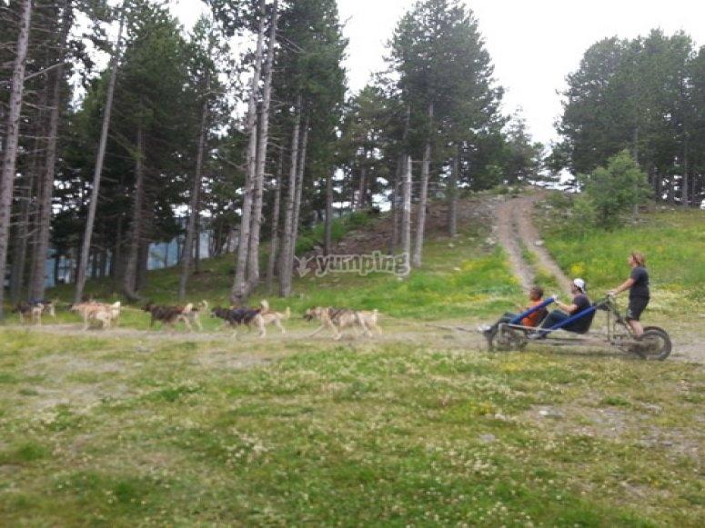 Mushing en Andorra
