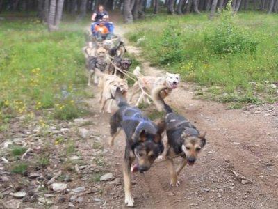 4x4 ride and Dog Sledding Andorra and Tor