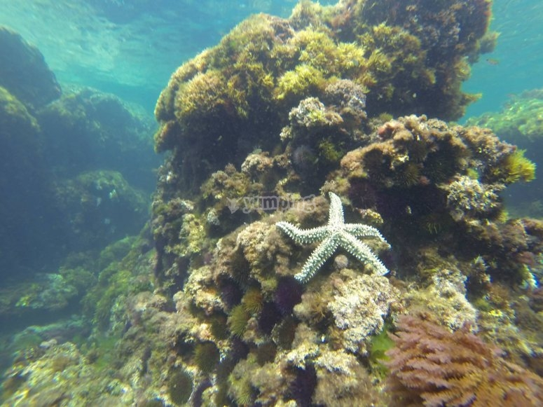 Under the water in Cantabria