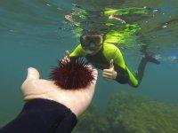 里斯海滩的海胆