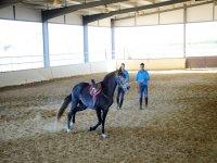 Dando rienda al caballo